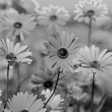 Woodstock Flowers & Gifts