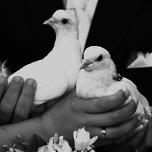 Medium the couple kept white doves in the hands